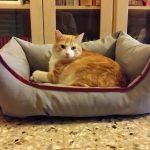 lettino per gatti